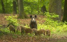 De Hoge Veluwe  The largest national park of the Netherlands.