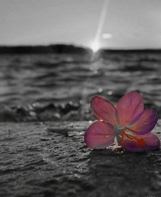 Keep Image, Color Splash Photo, White Picture, Black White Pink, 2 Colours, One Color, Summer Vibes, Sunny Days, Wallpapers