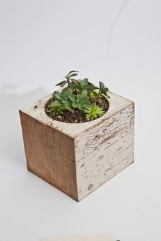wood block Planter