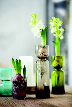 Vases to grow Amaryllis bulbs, by House Doctor.