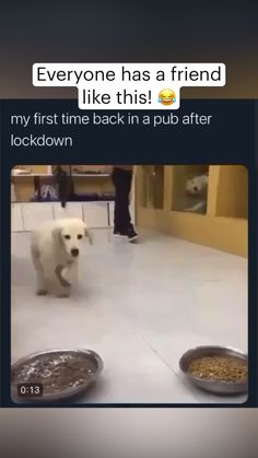 Funny Clean, Funny Videos Clean, Crazy Funny Videos, Clean Memes, Funny Dog Videos, Cute Baby Dogs, Cute Funny Dogs, Cute Funny Animals, Hilarious Animal Memes
