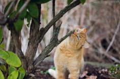 Sereina Charise Photography: The Neighbor Cat   Cute!