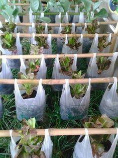 Potager garden 487162884694772524 - 40 cozy small vegetable garden ideas on a budget 8 Backyard Vegetable Gardens, Potager Garden, Vegetable Garden Design, Veg Garden, Garden Beds, Garden Compost, Garden Soil, Garden Trowel, Raised Garden Planters