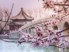 Wow!! |  Spring at the Summer Palace, Beijing - Visit http://asiaexpatguides.com and make the most of your experience in China! Like our FB page https://www.facebook.com/pages/Asia-Expat-Guides/162063957304747 and Follow our Twitter https://twitter.com/AsiaExpatGuides for more #ExpatTips and inspiration!