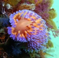 obsessed with Nudibranch, they are gorgeous & come in all sorts of crazy fantastic colors!!!!