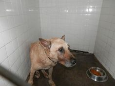 TEXAS - EMERGENCY - LILA IS SO SCARED & IN PAIN!! NEEDS TO SEE A VET ASAP!!!!! ___ PLEASE ___ SHARE & ____PLEDGE!! ___ SOS  ___  DIRE SITATION< URGENT