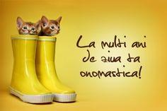 MESAJE SCURTE pentru SFÂNTUL IOAN- 7 IANUARIE 2015. URARI PRIN SMS PENTRU SFÂNTUL IOAN: Daca nu doriti sa trimiteti mesaje lungi si complicate, de SFÂNTUL IOAN, puteti oricând sa le urati lucruri frumoase prin mesaje scurte. Happy Name Day, Happy Names, Rubber Rain Boots