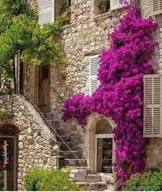 (France)— Colorful Bougainvillea and staircase lead to home in St. Bougainvillea, Beautiful Homes, Beautiful Places, Front Entrances, Stone Houses, Colorful Flowers, Exotic Flowers, Purple Flowers, Porches