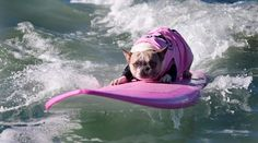 Take a Look at this Incredibles Surfing Dogs !!!