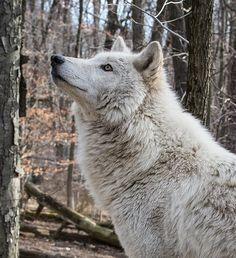 """WolfさんはTwitterを使っています: """"https://t.co/iSkxogixuQ"""""""