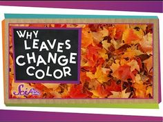 Did you know it's not really accurate to say the leaves 'change' color? This simple explanation will catch you up on how leaves change color and why the timing and brilliance of the leaves can vary from year to year. Autumn Art, Autumn Theme, Autumn Leaves, Fall Preschool, Kindergarten Science, Autumn Activities, Science Activities, Science Videos, Group Activities