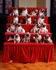 I don't know what's going on here, but I know I like it. #Pugs group!