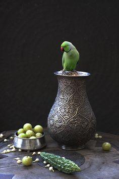 image from Tasveer Arts, Karen Knorr.  A still life where the bird is still alive :)