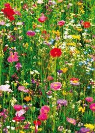 Idealdecor Flower Field 375 | Wizard & Genius Idealdecor | www.behangwereld.nl