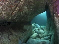 Alexander Mustard tirou esta foto vencedora na categoria habitat enquanto mergulhava nas ilhas Lundy, no Canal de Bristol. Vi uma foca nadando nesta caverna colorida e esperei... e esperei.