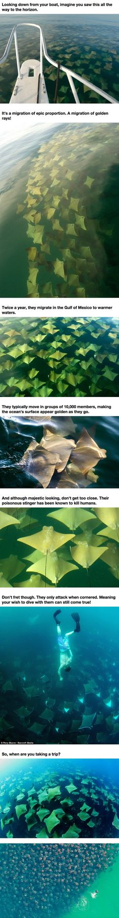 What Was Discovered Moving Through The Ocean Is Terrifying Beyond Words. What...