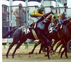 Sham, Second only to Secretariat, Sham was a great horse also in 1973, the Year of Secretariat.