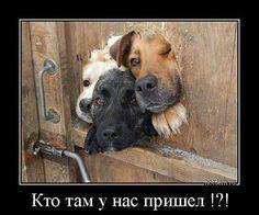 Собака - одно из немногих существ на этой планете, которое любит вас больше, чем себя.
