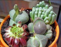 Ideias Inspiradoras - Cactos & Suculentas (vasos/container plants)