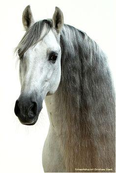 horse / Andrea A. S.