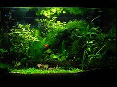Sunburst's Aquarium Garden by Sunstars.deviantart.com on @deviantART