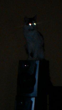 Lili, o observador