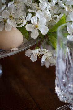 in cucina, fiori di ciliegio <3