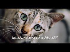 Porquê não se deve borrifar água no seu gato quando ele arranha o sofá (catnip solução) - YouTube