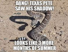 Texas Pete saw his shadow.looks like 3 more months of summer. Texas Meme, Texas Humor, Texas Funny, Texas Pride, Texas Usa, West Texas, Texas Texans, Texas Coast, Lubbock Texas