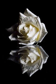 Reflecting Rose II Rae McLeod