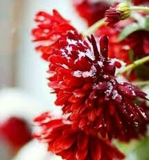 30 Best Snow Covered Flowers Images Flowers Winter