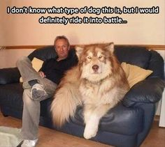 Pinner's have speculated this dog is a giant alaskan malamute..