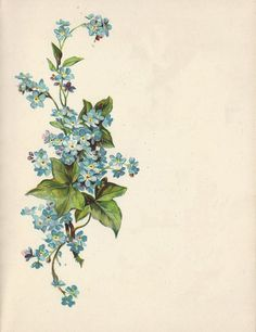 These little blue beauties are called forget-me-nots. Imagine them embroidered on a dress bodice or a silk purse #Spring2014