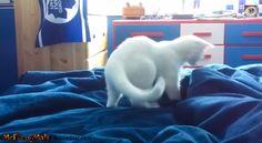 Ein besonders lustiges Katzen Video: Heute hüpfen die kleinen, süßen Kätzchen auf dem Wasserbett herum. Ihre Reaktion sind einfach unglaublich.  Interessante Neuigkeiten aus der Welt auf BuzzerStar.com : BuzzerStar News - https://www.buzzerstar.com/ein-besonders-lustiges-katzen-video-heute-huepfen-die-kleinen-suessen-kaetzchen-auf-dem-wasserbett-herum-ihre-reaktion-sind-9754dd75e.html