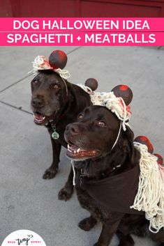 I had the idea to dress my two chocolate labradors up as Spaghetti and Meatballs for Halloween! This DIY dog couples costume is made with felt, yard and foam craft balls. If you love to eat, or if you're Italian, this is the perfect DIY dog Halloween costume! This dog costume is so unique, you will not see anyone else with it! Stand out as Spaghetti and Meatballs! This costume is dog walk friendly (although you might loose a few meatballs!). Diy Dog Halloween Costumes, Halloween Stuff, Halloween Ideas, Costume Ideas, Chocolate Labradors, Chocolate Labs, Dog And Owner Costumes, Dog Washing Station, Durable Dog Toys