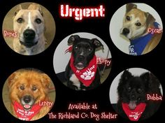 Dogs needing rescue or adoption by Oct. 27, 2014 at Richland County Dog Shelter ~ SOME OF THE DOGS WERE ALREADY PUT DOWN ~ PLZ CONTACT SHELTER IF YOU CAN HELP SAVE BY RESCUING OR ADOPTING. Mansfield, OH ~They work w/rescues http://www.examiner.com/list/dogs-needing-rescue-or-adoption-by-oct-27-at-richland-county-dog-shelter