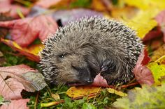Easy things we can do to help hedgehogs.