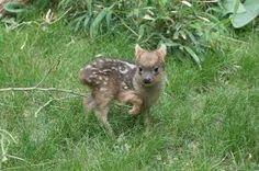 Image result for deer