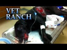 Watch How This Incredible Vet Saves A Dog Who Was Hit By A Car (HEADS UP! some graphic content in video)