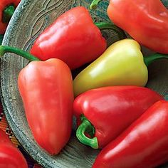 The Mariachi Pepper is a 2006 All-American Selection winner! This colorful pepper has just a bit of mildly hot heat. The compact inch plants yield loads of 4 inch, coned shaped peppers that change brilliantly from creamy yellow to bright red all summer. Plastic Trays, Plastic Pots, Capsicum Annuum, Garden Stand, Pepper Plants, Pepper Seeds, Tomato Cages, Stuffed Hot Peppers, Pickles