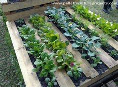 All that we have got to do is to collect a couple of some fresh wooden pallets. First you have to prepare them by sanding them very well. Now put a jute fibers made fabric inside the pallet wood so that the herbs do not cross over and fall out.