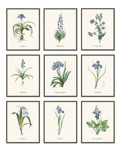 Blue Lilies 1 - Antique Botanical Print Set of 9 - vintage flower art - wall hanging posters - multi