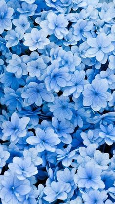 ▷ 1001 + spring wallpaper images for your phone and desktop computer - Lifestyle - ▷ 1001 + spring wallpaper images for your phone and desktop computer little blue flowers, floral phone wallpaper, phone background, spring images Frühling Wallpaper, Blue Flower Wallpaper, Spring Wallpaper, Iphone Background Wallpaper, Aesthetic Iphone Wallpaper, Aesthetic Wallpapers, Flowers Background Iphone, Summer Wallpaper Phone, Floral Wallpaper Phone