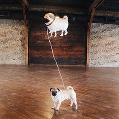 """""""""""If you're a pug, I'm a pug"""" -Doug"""""""