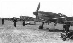 Captured Focke-Wulf Fw 190D-9s in service with the Baltic Fleet Aviation - June 1945.