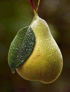 Pera ~~ For more:  - ✯ http://www.pinterest.com/PinFantasy/flora-~-frutas-y-hortalizas-fruits-and-vegetables/