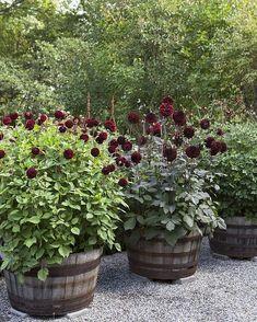 Thrilling About Container Gardening Ideas. Amazing All About Container Gardening Ideas. Flower Planters, Garden Planters, Container Plants, Container Gardening, Back Gardens, Outdoor Gardens, Plantar, Dream Garden, Garden Planning