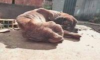 """""""O GRITO DO BICHO"""": Voluntários e PM resgatam animais vítimas de maus-..."""