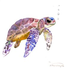Sea Turtle , 12 x 12 in, original watercolor painting, whale art, sea animal art, seaworld, sage violet green