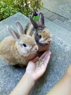 cutie bunnies!